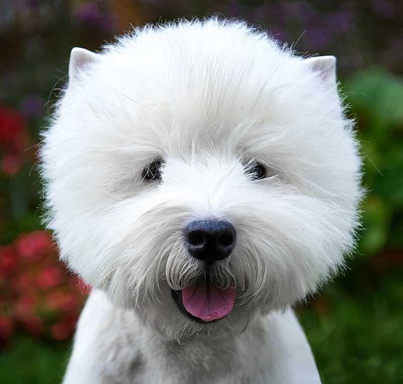 Well Groomed Dog