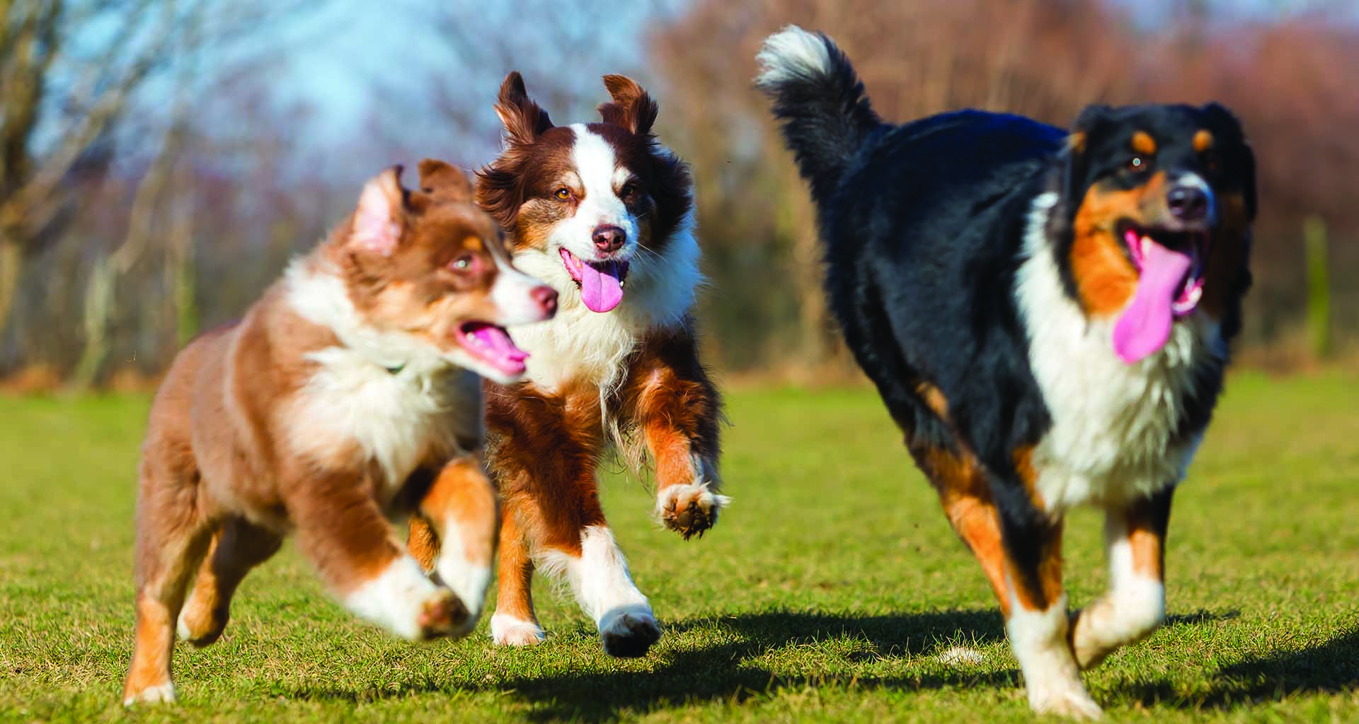 Dogs running and playing happily at Diggity Dawg Daycare in Wernersville, Pennsylvania.