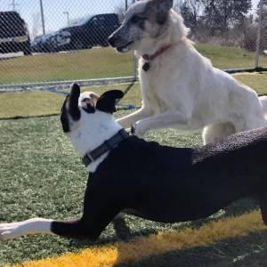 diggity-dawg-daycare-wernersville-pennsylvania-dog-daycare-3