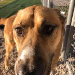 diggity-dawg-daycare-wernersville-pennsylvania-dog-daycare-5