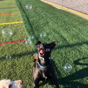 diggity-dawg-daycare-wernersville-pennsylvania-dog-daycare-6