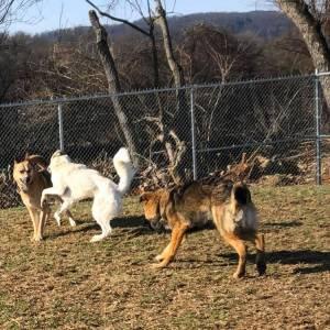 diggity-dawg-daycare-wernersville-pennsylvania-dog-daycare-7