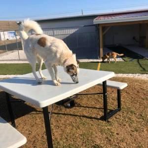 diggity-dawg-daycare-wernersville-pennsylvania-dog-daycare-8