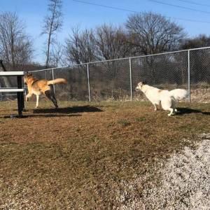diggity-dawg-daycare-wernersville-pennsylvania-dog-daycare-9