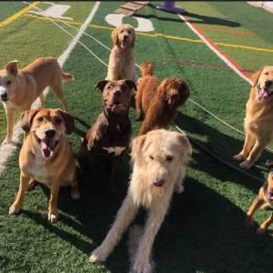 diggity-dawg-daycare-resort-spa-wernersville-pennsylvania-dog-1