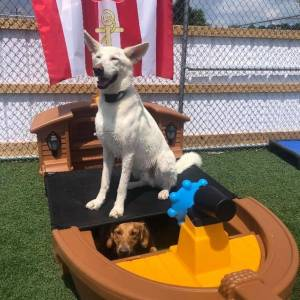 diggity-dawg-daycare-resort-spa-wernersville-pennsylvania-dog-10
