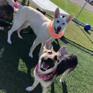 diggity-dawg-daycare-resort-spa-wernersville-pennsylvania-dog-12