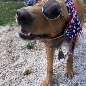 diggity-dawg-daycare-resort-spa-wernersville-pennsylvania-dog-13