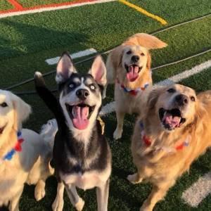 diggity-dawg-daycare-resort-spa-wernersville-pennsylvania-dog-14