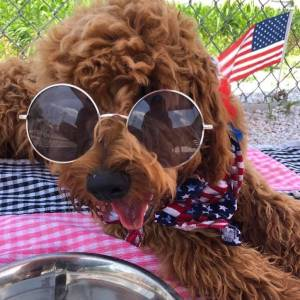 diggity-dawg-daycare-resort-spa-wernersville-pennsylvania-dog-15