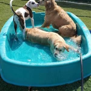 diggity-dawg-daycare-resort-spa-wernersville-pennsylvania-dog-16