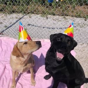 diggity-dawg-daycare-resort-spa-wernersville-pennsylvania-dog-19
