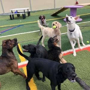 diggity-dawg-daycare-resort-spa-wernersville-pennsylvania-dog-20