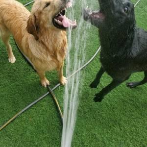 diggity-dawg-daycare-resort-spa-wernersville-pennsylvania-dog-24