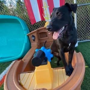 diggity-dawg-daycare-resort-spa-wernersville-pennsylvania-dog-27