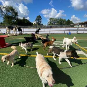 diggity-dawg-daycare-resort-spa-wernersville-pennsylvania-dog-28