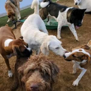 diggity-dawg-daycare-resort-spa-wernersville-pennsylvania-dog-29