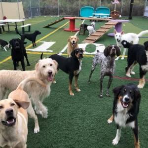 diggity-dawg-daycare-resort-spa-wernersville-pennsylvania-dog-34