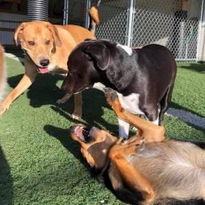 diggity-dawg-daycare-resort-spa-wernersville-pennsylvania-dog-35