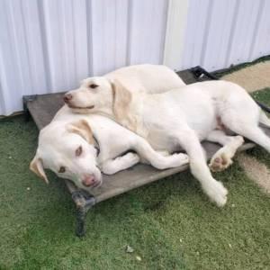 diggity-dawg-daycare-resort-spa-wernersville-pennsylvania-dog-38