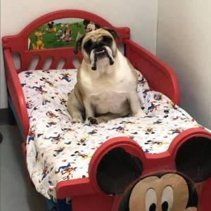 diggity-dawg-daycare-resort-spa-wernersville-pennsylvania-dog-39