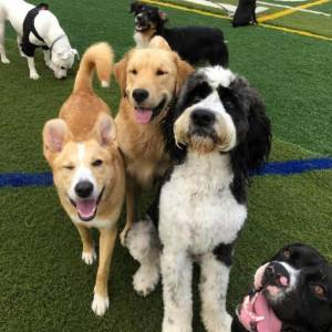 diggity-dawg-daycare-resort-spa-wernersville-pennsylvania-dog-40