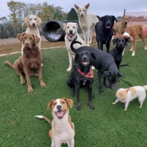 diggity-dawg-daycare-resort-spa-wernersville-pennsylvania-dog-43