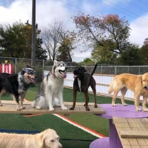 diggity-dawg-daycare-resort-spa-wernersville-pennsylvania-dog-44