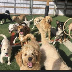 diggity-dawg-daycare-resort-spa-wernersville-pennsylvania-dog-49