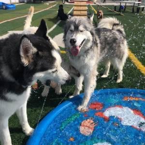 diggity-dawg-daycare-resort-spa-wernersville-pennsylvania-dog-5