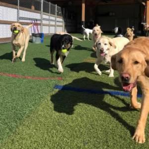 diggity-dawg-daycare-resort-spa-wernersville-pennsylvania-dog-50