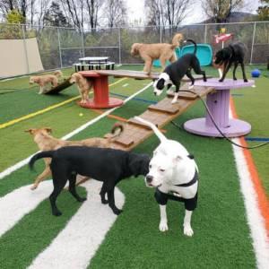 diggity-dawg-daycare-resort-spa-wernersville-pennsylvania-dog-56