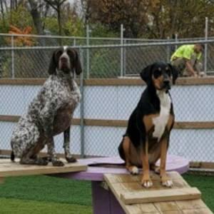 diggity-dawg-daycare-resort-spa-wernersville-pennsylvania-dog-59
