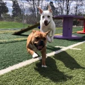 diggity-dawg-daycare-resort-spa-wernersville-pennsylvania-dog-6