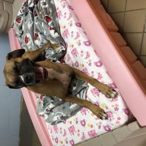 diggity-dawg-daycare-resort-spa-wernersville-pennsylvania-dog-62