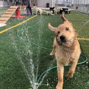 diggity-dawg-daycare-resort-spa-wernersville-pennsylvania-dog-7
