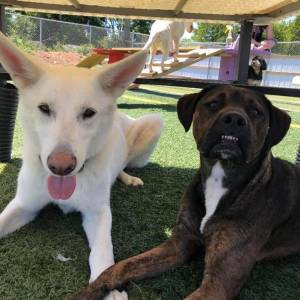 diggity-dawg-daycare-resort-spa-wernersville-pennsylvania-dog-8