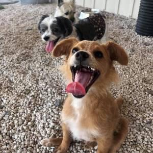 diggity-dawg-daycare-resort-spa-wernersville-pennsylvania-dog-9